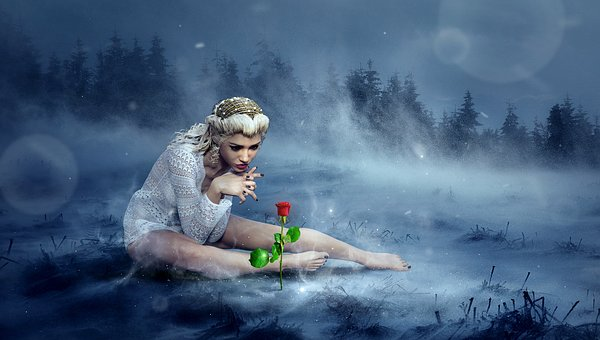 fairy of nature, in winter dressed in white watching over a rose