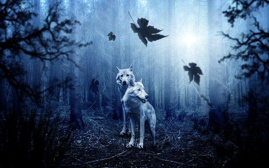 deux loups blancs dans la foret a l'aube