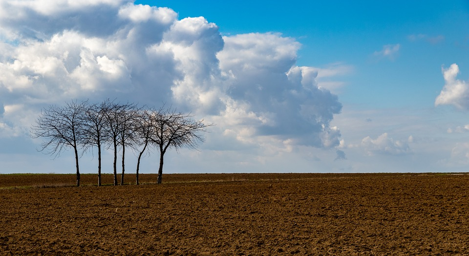 grove of three trees