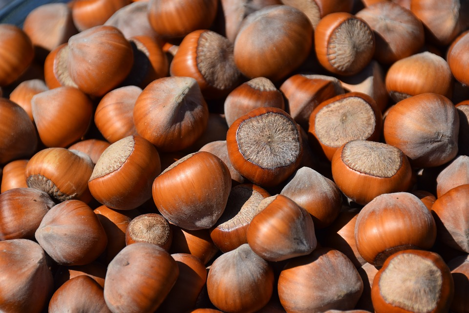 picture of many brown nuts