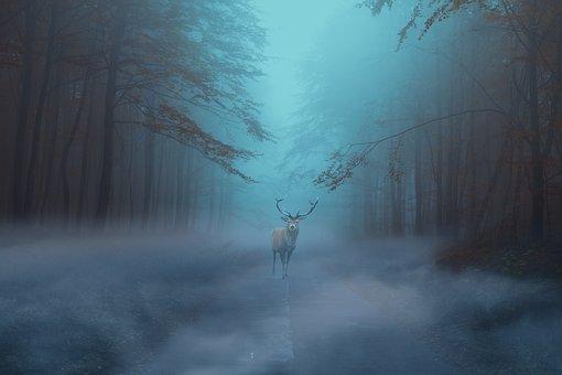 cerf dans un bois mysterieux
