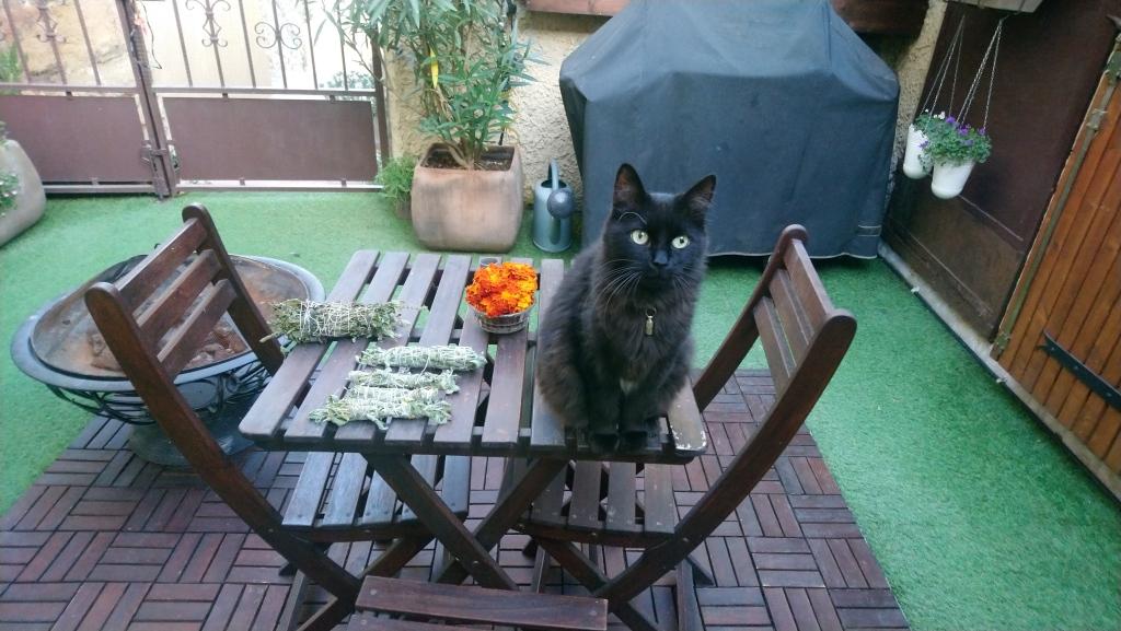 petit chat noir sur table en bois qui pose prés de rouleau de sauge médicinale